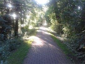 Ostfriesland_Wanderweg_Allee