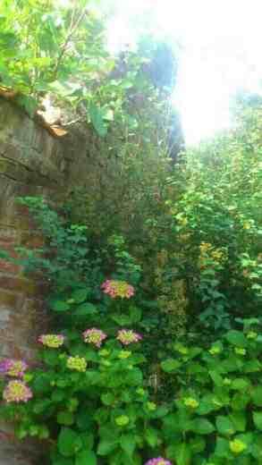 Aussenmauer mit Ranke