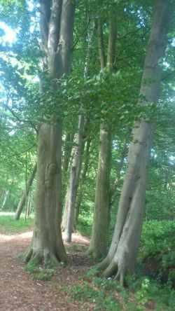Gegengerade Baumgruppe