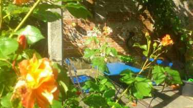 Rose mit Sitzecke
