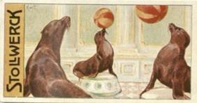 Seehundsjagd 12e