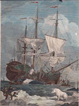 Abspecken des Wals