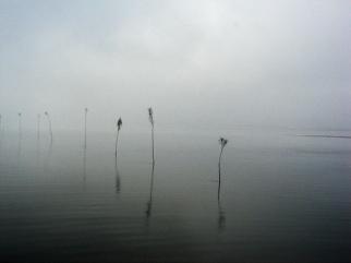Pricken im Nebel