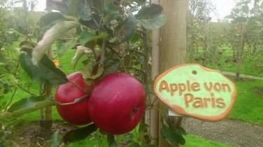 Apfel des Paris