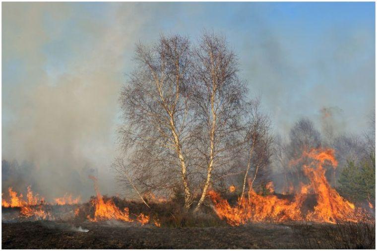 Brandrodung_Drover Heide