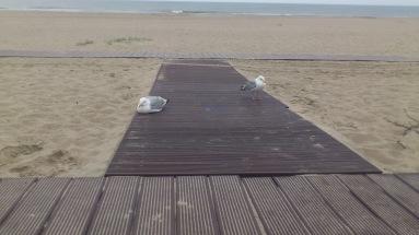 Boardwalk mit Moewen
