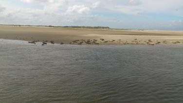 Seehundsbänke von Norderney