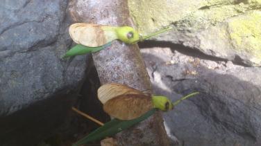 Kunst ab Baum